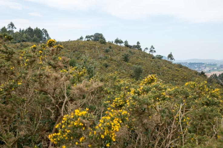 Plantación en Peñas Negras.