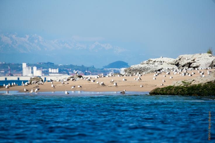 Las gaviotas y otras aves marinas anidan en Isla de Santa Marina.