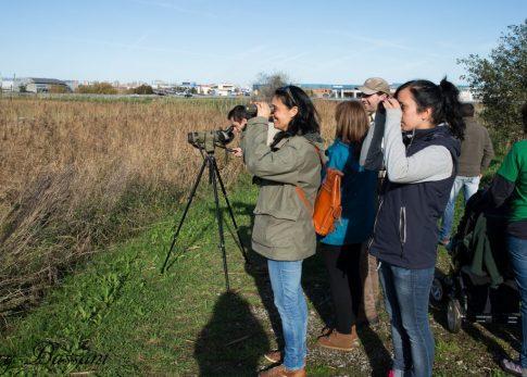 Observación de aves en las Marismas de Alday.