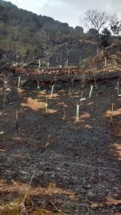 repoblacion Pozos de Valcaba incendio 2