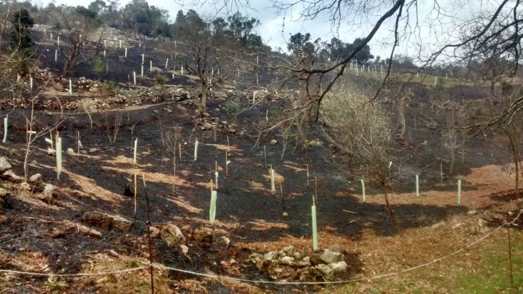 incendio en la repoblación de Pozos de Valcaba