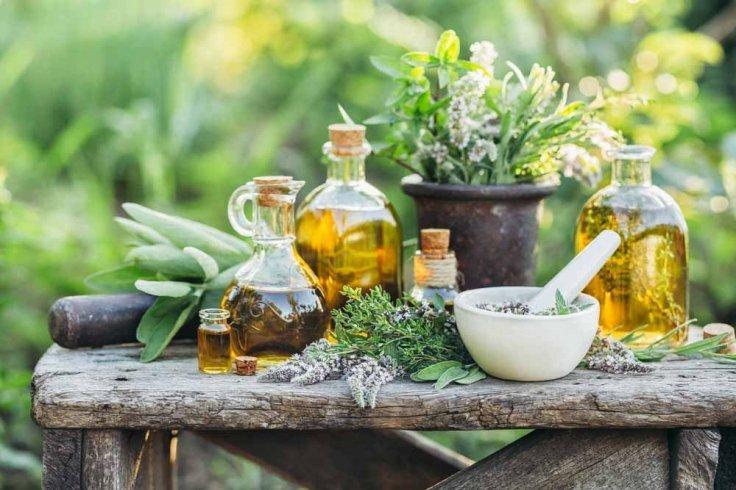 1547731281_archive_1_plantas_medicinales